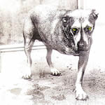 Alice In Chains 1995 album
